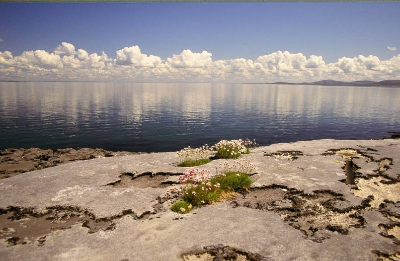 Burren coast view with flowers growing up out of the rocks