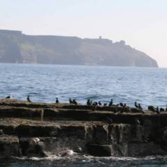 Cliffs of Moher Sea Birds on a boat tour